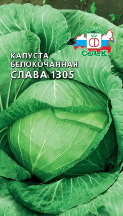 Сорт капусты Слава - Сорт-инфо ру